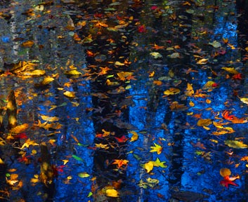 Floating Leaves, South Carolina, by Clinton Smith
