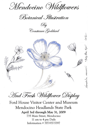 Constance Goddard: Mendocino Wildflowers Botanical Illustrations