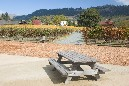 Nice place to share some wine and cheese out in the vineyard
