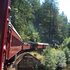 Skunk Train Through the Redwoods