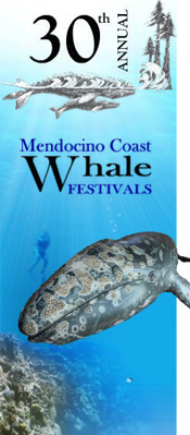 30th Annual Mendocino Coast Whale Festivals
