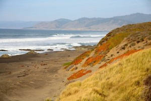 Ten Mile is a long, secluded beach in Fort Bragg, California