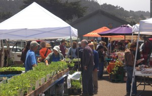 Mendocino Farmer's Market is running again!