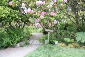 If You Are A Flower Photographer, Gardener, Or Just Love Natureu0027s Beauty,  The Rhododendrons In Bloom (now Through June) At The Mendocino Coast  Botanical ...