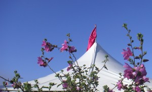 Festival Concert Tent framed by flowers and topped with flags.