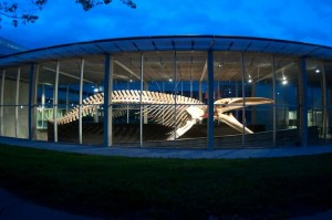 Future home of Fort Bragg's blue whale skeleton.